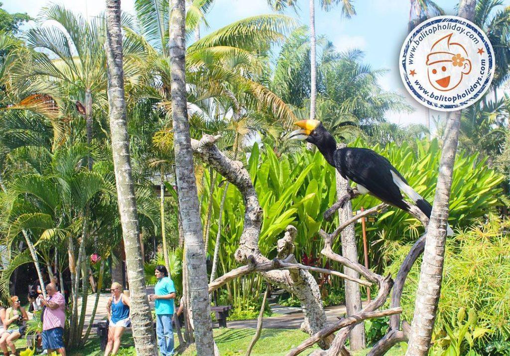 Tour bali bird park
