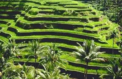 desa tegalalang