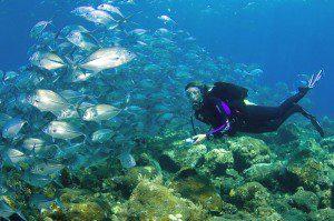 Diving Bali – Tulamben, Nusa Penida dan Menjangan