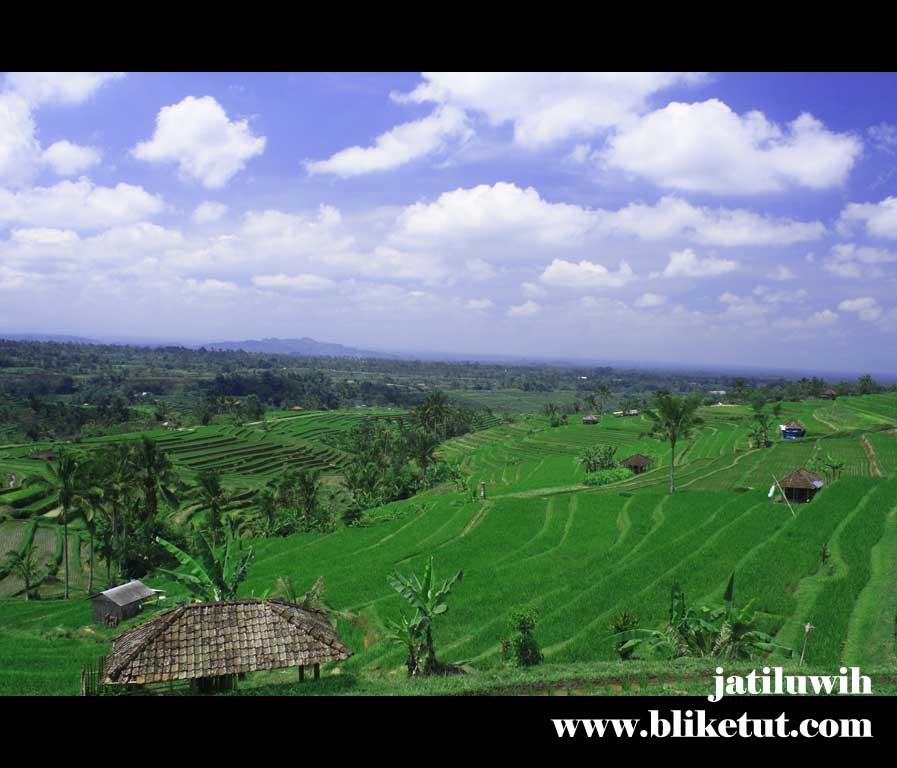 Bali Farming & Tanah Lot Sunset Tour 3