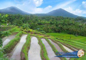 Obyek Wisata Jatiluwih Bali