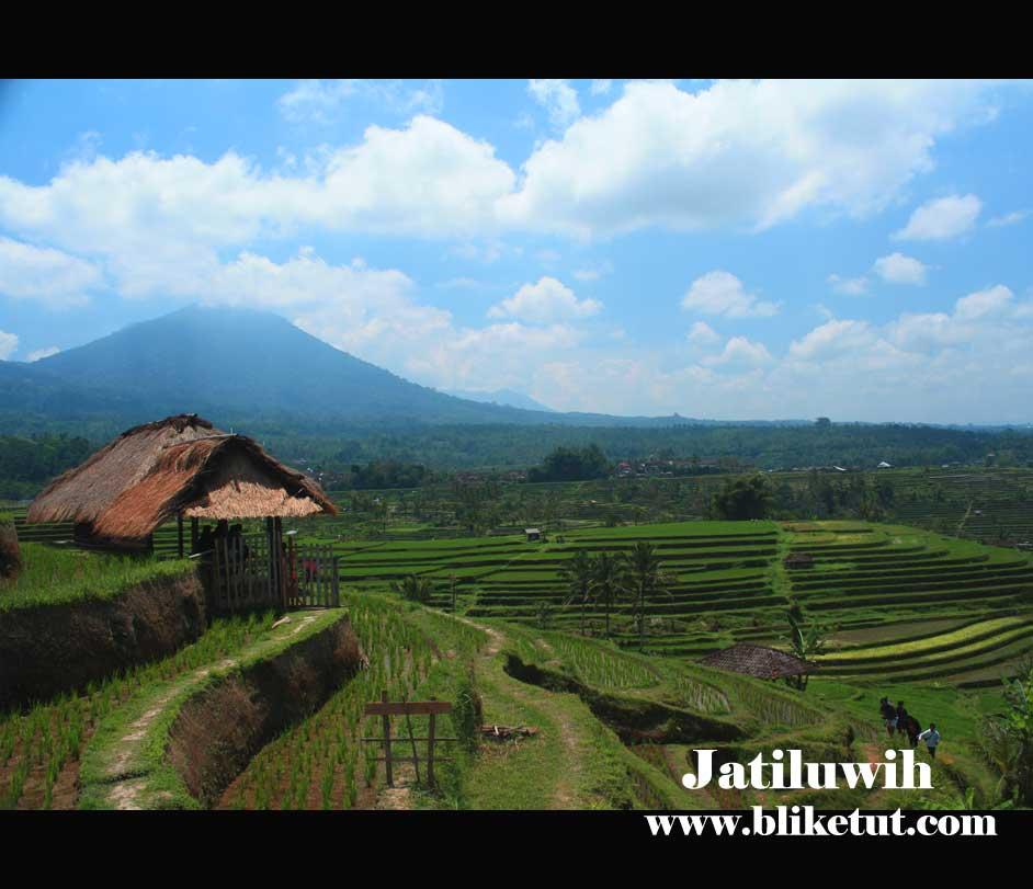 Bali Farming & Tanah Lot Sunset Tour 1