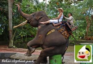 aik-gajah-di-bali