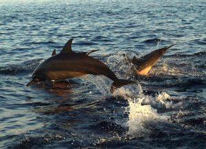 Tour Lovina & Obyek Wisata Sekitar Pantai Lovina