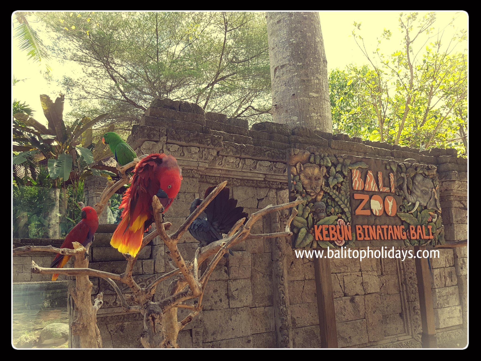Paket Tour Bali Zoo Park