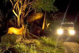 Paket Tour Bali Bird Park + Night Safari 1