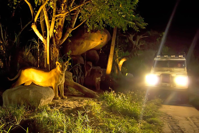 night safari bali